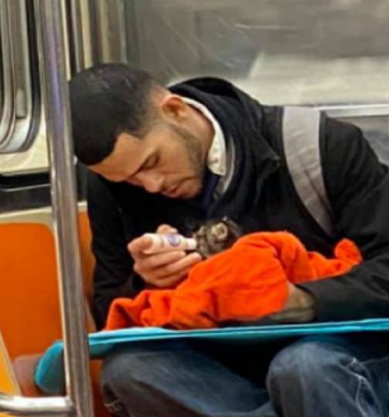 Man in metro New York met kitten op schoot.